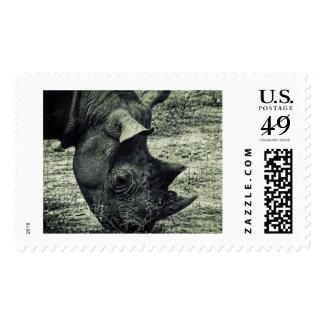 Black Rhino Grazing, Grunge, Monochrome Postage