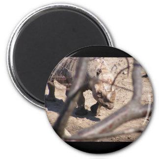 Black Rhino Fridge Magnets