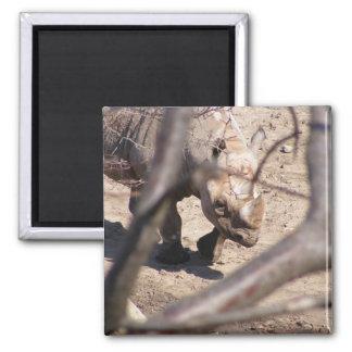 Black Rhino Magnets