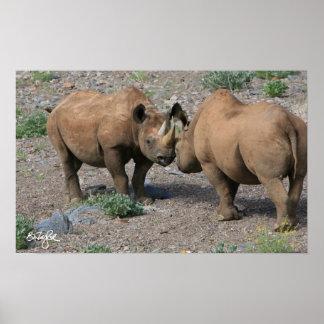 Black Rhinoceros ( Diceros bicornis bicornis ) Poster