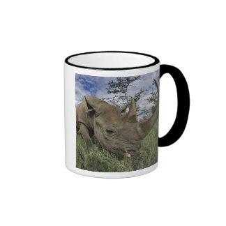 Black Rhinoceros, Diceros bicornis, Kenya Coffee Mugs