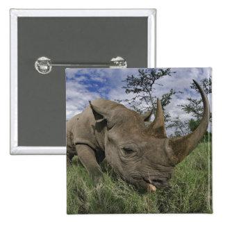 Black Rhinoceros, Diceros bicornis, Kenya Pinback Button