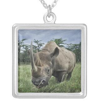 Black Rhinoceros, Diceros bicornis, Kenya Silver Plated Necklace