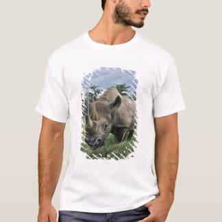 Black Rhinoceros, Diceros bicornis, Kenya T-Shirt