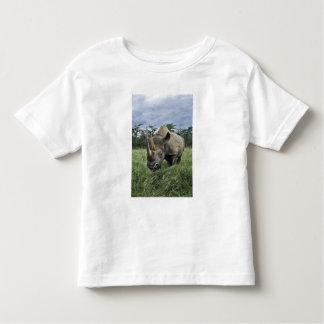 Black Rhinoceros, Diceros bicornis, Kenya Tee Shirt