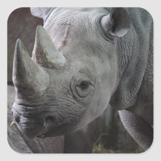 Black Rhinoceros Photo Square Sticker