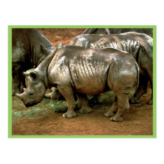 Black rhinoceros post cards