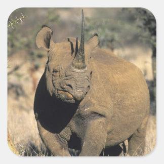 Black Rhinocerous, (Diceros bicornis), Northern Square Sticker