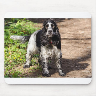 black roan english cocker spaniel mouse pad