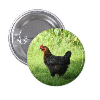 Black Rock Hen Pinback Button