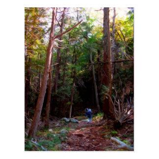 Black Rock Trails, Harriman State Park, New York Postcard