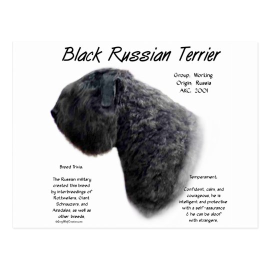 Black Russian Terrier History Design Postcard