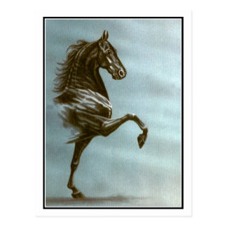 Black Saddlebred Horse Post Cards