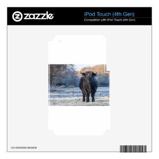 Black scottish highlander cow in winter landscape iPod touch 4G decals