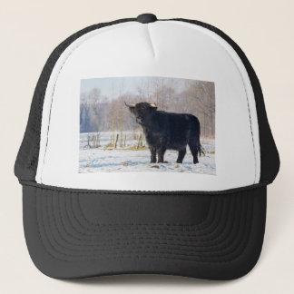 Black scottish highlander cow in winter snow trucker hat