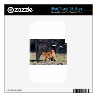 Black Scottish highlander mother cow and young iPod Touch 4G Decal