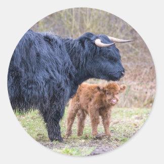 Black Scottish highlander mother cow with newborn Classic Round Sticker