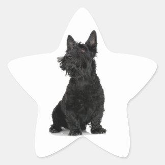 Black Scottish Terrier Star Sticker