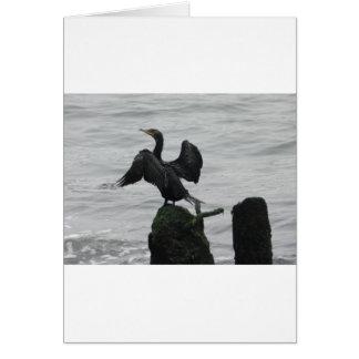 Black Seabird Card