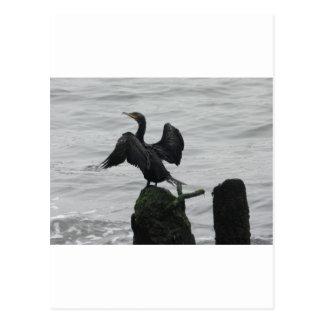 Black Seabird Postcard