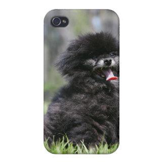 Black Senior Pomeranian iPhone 4 Case