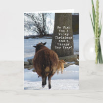 Black Sheep and Cat, Christmas Holiday Card
