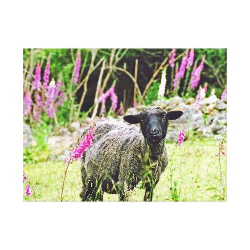 Black Sheep Gallery Wrap Canvas