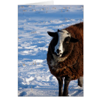 Black Sheep in Winter Greeting Card