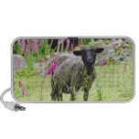 Black Sheep iPod Speaker