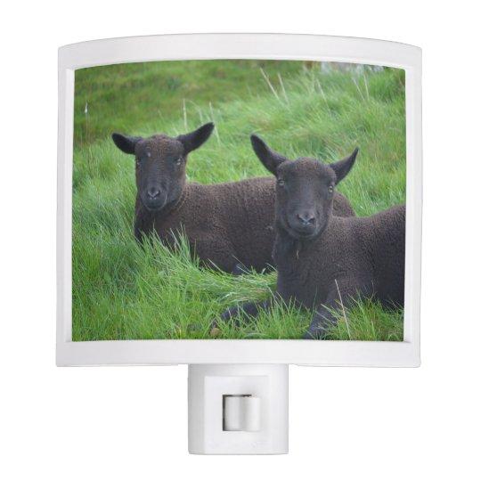 Black Sheep Night Light Zazzle Com