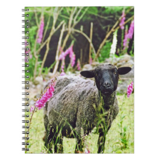 Black Sheep Note Books