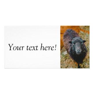 Black sheep photo card