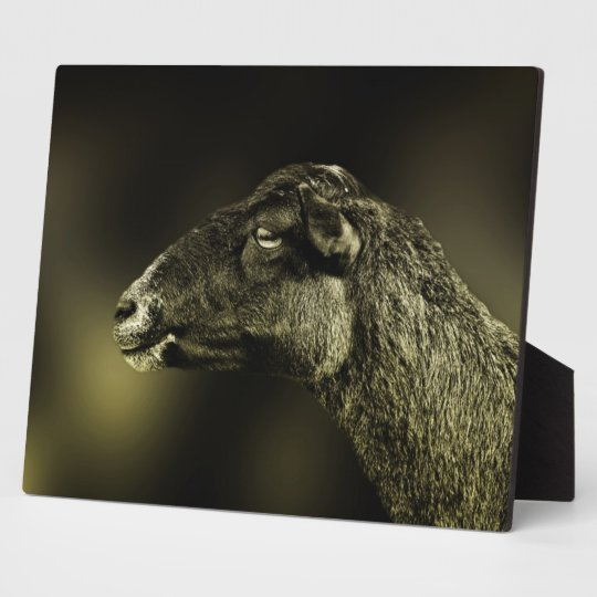 Black Sheep Plaque
