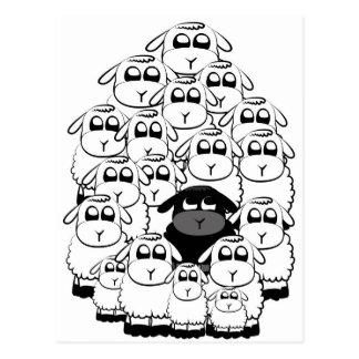 Black sheep postcard