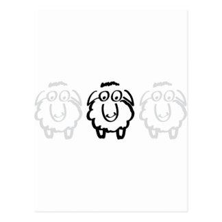black sheep white sheeps postcard