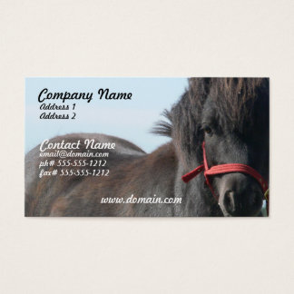 Black Shetland Pony Business Card