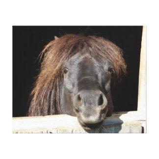 Black Shetland Pony Canvas Print