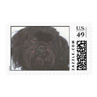 Black Shih Tzu Stamps