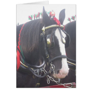 Black shire horse portrait animal blank photo card