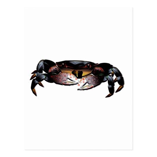 Black Shore Crab Postcard