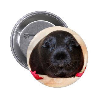 Black Short Haired Romance Guinea Pig Pinback Button