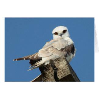 Black shouldered kite stationery note card