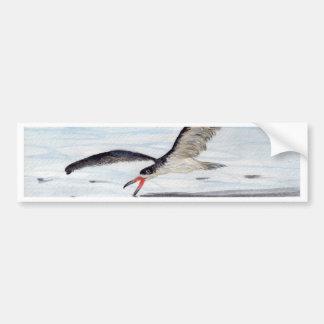 Black Skimmer Bumper Sticker