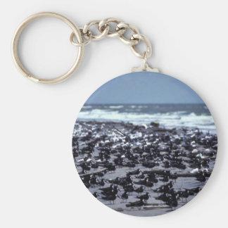 Black skimmers and sandwich terns keychains