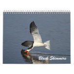 Black Skimmers Calendars