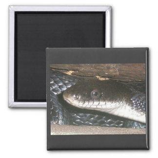 Black Snake Magnet