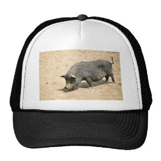 Black sow trucker hat