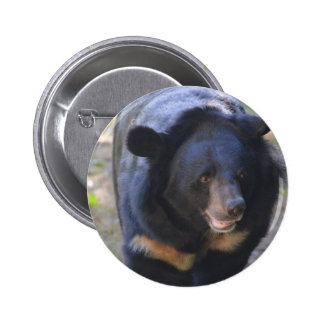 Black Spectacled Bear Button