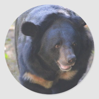 Black Spectacled Bear Classic Round Sticker