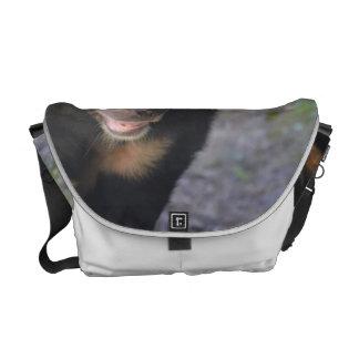 Black Spectacled Bear Messenger Bag